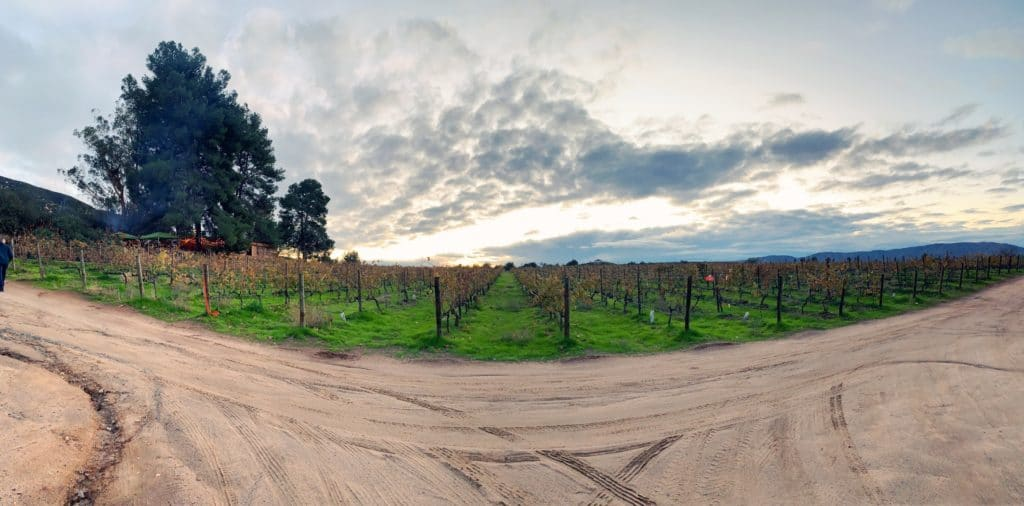 panoramic of vineyard in front of deckmans